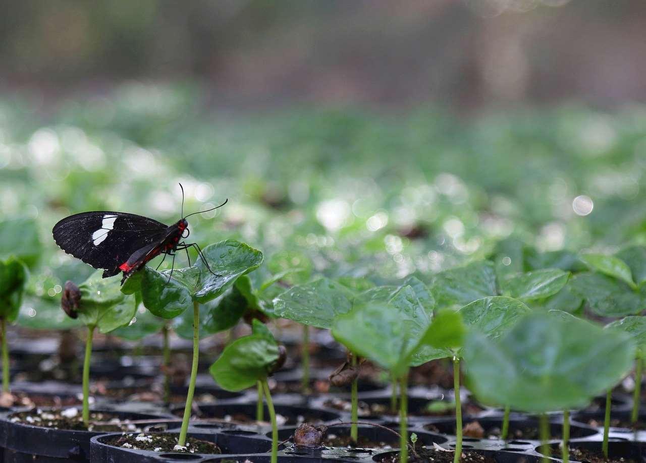 Bild på små växter